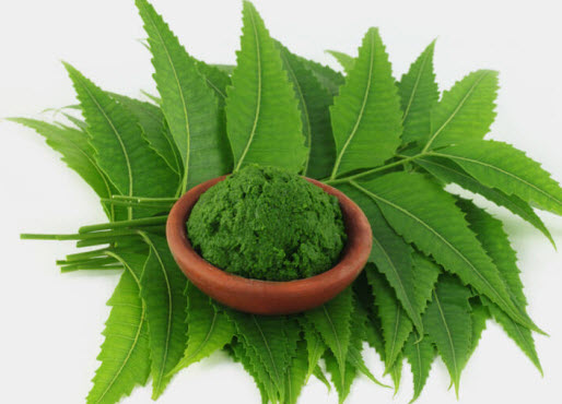 Neem for Acne and Pimple Treatments